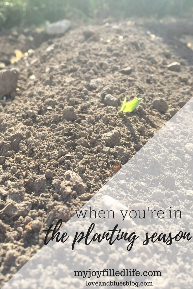 When You're In the Planting Season: Guest Post